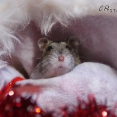 Geef de hamsters beschutting, waar ze níét me euit zicht kunnen verdwijnen