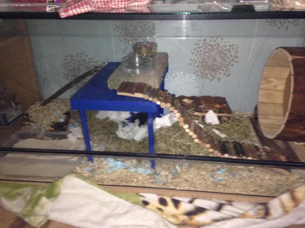 Het eerste verblijf dat Elise heeft ingericht, voor haar hamster Monster.