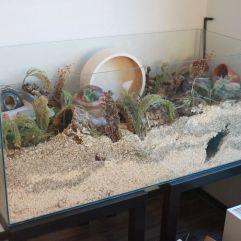 Een aquarium van Elisabeth.